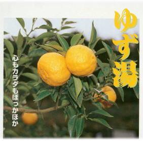 yuzu11